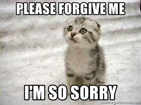 Im Sorry Memes - please forgive me i m so sorry the favre kitten meme generator