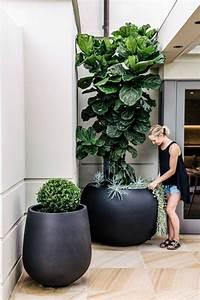 Dekorative Pflanzen Fürs Wohnzimmer : pflanzk bel erst im richtigen pflanzgef zeigen pflanzen ihre nat rliche pracht ~ Eleganceandgraceweddings.com Haus und Dekorationen