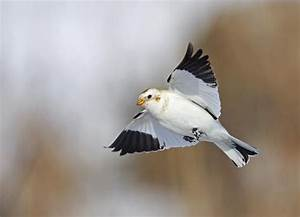 11 best Top 10 Arctic Birds in the World images on ...