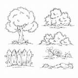 Shrubs Coloring Pages Surfnetkids sketch template