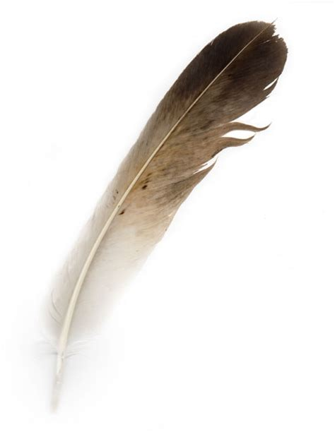 bird feather  stock photo public domain pictures