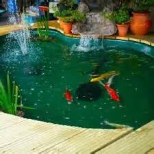 types  fish pond types