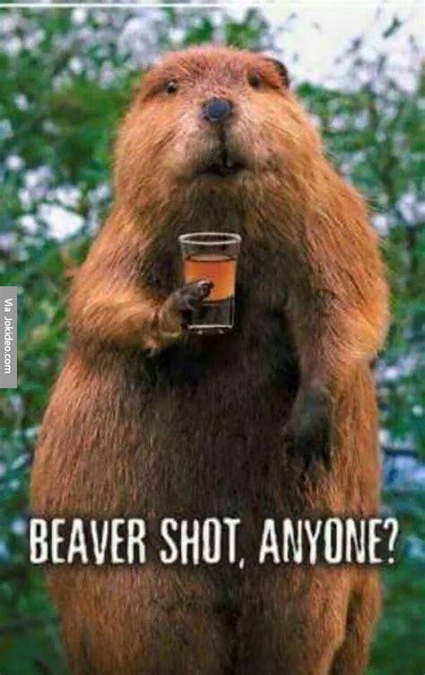 Beaver Meme - beaver shot