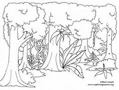 Amazon Rainforest Mural  Jungle Drawing With Animals