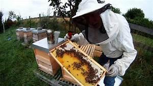 Wie überwintern Bienen : bienen nach der honigernte eine bestandsaufnahme video selbstversorgung aus dem eignen garten ~ A.2002-acura-tl-radio.info Haus und Dekorationen