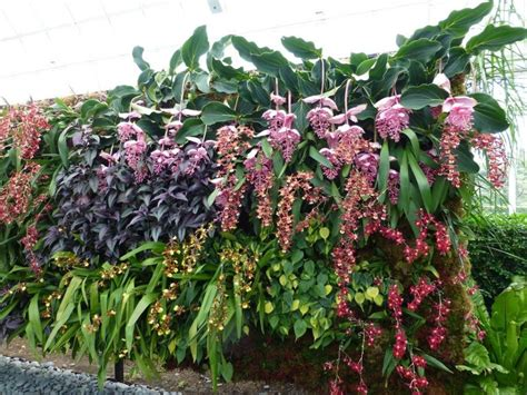 tanaman hias gantung cocok rumahmu bibit