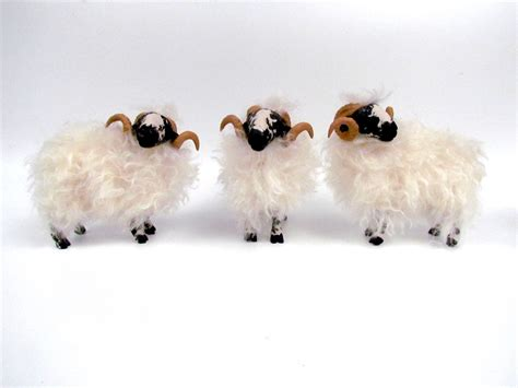 scottish blackface rams