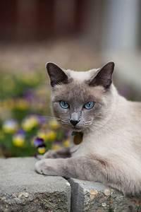 Balkonschutz Für Katzen : hornveilchen giftig f r katzen ~ Eleganceandgraceweddings.com Haus und Dekorationen