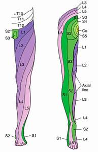 Flashcards - S1M2 Anatomy - femoral triangle Quadriceps ...