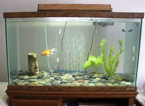 decor de fond aquarium goldfish tank design www proteckmachinery