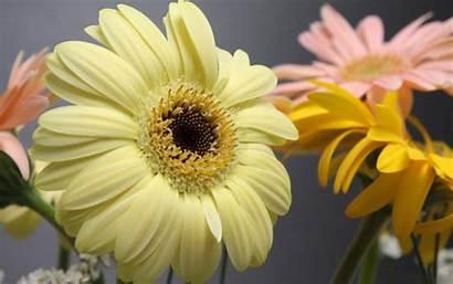 Laptop Wallpapers Backgrounds Flowers Excellent Quotes Desktop