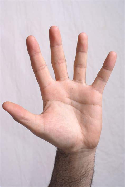 Five Fingers by Quot That They Might Quot 10 10 Five Finger Contract