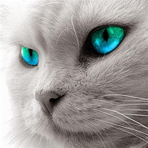 صور قطط 2015 رومي غاية في الجمال Photos Cats « تحميلات ويب