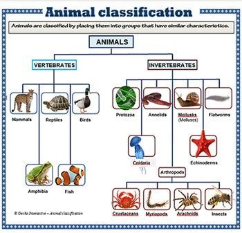 Animal Classification poster set by Gecko Interactive TpT