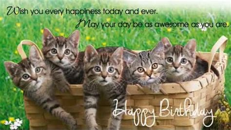 birthday kitties  birthday wishes ecards greeting