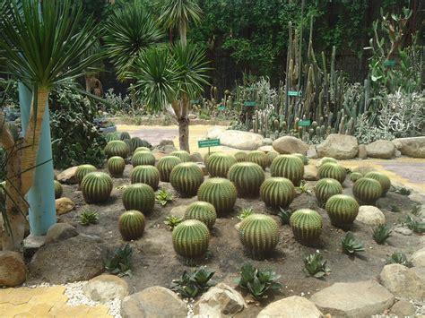 Beautiful Indoor Or Outdoor Cactus Garden Designs