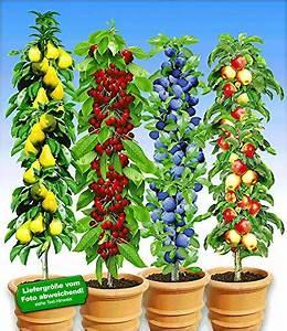 Säulen Pflanzen Winterhart : garten garten balkonpflanzen produkte von baldur garten online finden bei i dex ~ Frokenaadalensverden.com Haus und Dekorationen