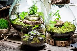 Acheter Terrarium Plante : terrarium plante lyon ~ Teatrodelosmanantiales.com Idées de Décoration