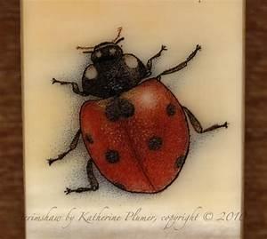 Ladybug Under Microscope
