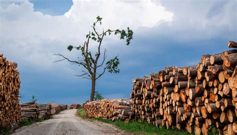 Covid-19 krīzes skartās atzītās mežsaimniecības ...