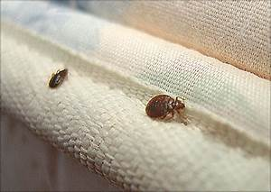 bed bugs and bed sheets bed bugscom With does washing sheets kill bed bugs