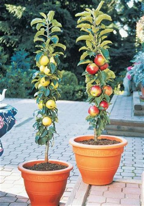 66 plants you can grow in pots culture scribe