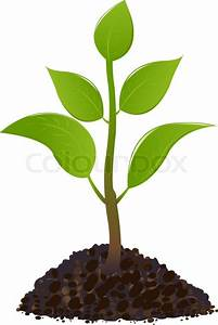 Young plant, Isolated On White | Stock Vector | Colourbox