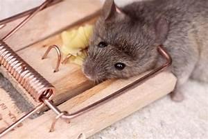 Mäuse Bekämpfen Haus : m use im haus bek mpfen ~ Michelbontemps.com Haus und Dekorationen