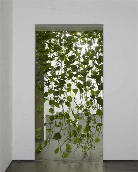 claustra bureau the differences between golden pothos and heartleaf