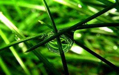 Pflanzen 1920 Widescreen 1200 Aktuelle Groesse