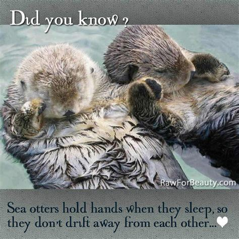 Sea Otter Meme - funny animal memes part 5