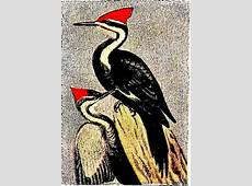 Pileated woodpecker shows up in Dearborn after 100year