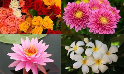ดอกไม้ประจำ 12 ราศี ความหมายของดอกไม้มงคลในประเทศไทย