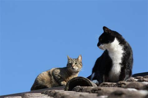 marder und katzen marder und katzen verhalten