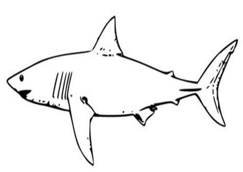 white shark coloring pages coloring animals pinterest