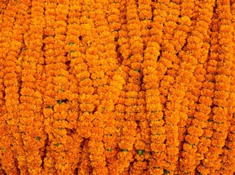 marigold garlands for sale marigolds for sale at flower market below howrah bridge kolkata india marigold wedding