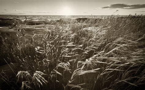 Sunlight Grass Coast Ocean Beaches Shore Sea Monochrome