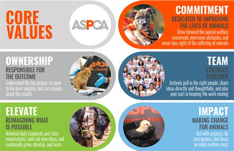 careers jobs   aspca aspca