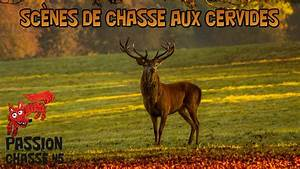 You Tube Chasse : sc nes de chasse aux cervid s youtube ~ Medecine-chirurgie-esthetiques.com Avis de Voitures