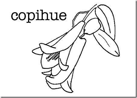 copihue gif