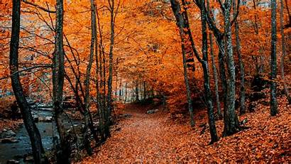 Autumn Fall Trees Path Foliage Forest Wallpapers