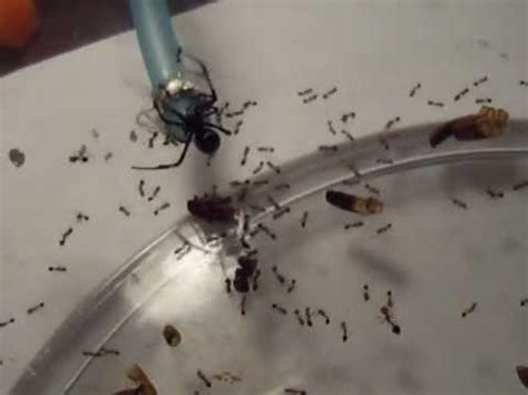 ants in kitchen 17 best images about get rid of house ants on pinterest homemade ants and sodas
