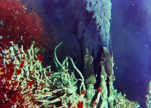 How did they get there? The colonization of a hydrothermal ...