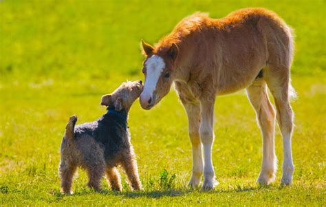 horses dogs differences ground common smart play