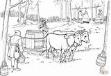 Syrup Maple Coloring Oxen Pulling Sled Pages Barrel Printable Ox Tree Template Drawing Supercoloring Clipart sketch template