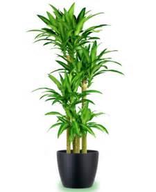 growing ls for indoor plants uk indoor plants uk indoor plants best position and best