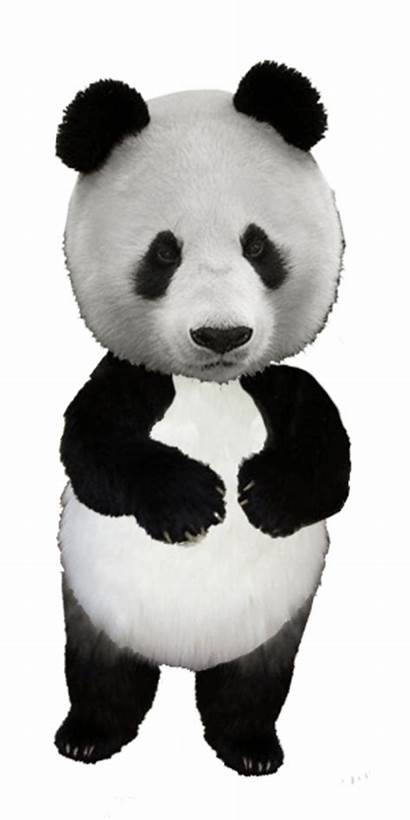 Panda Gifs Pandawhale Francheska45 Amie Animes Sorte