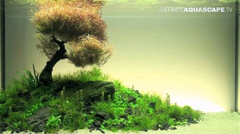 Planted Aquascape by Aquascaping The Of The Planted Aquarium 2012 Xl
