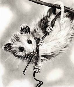 Dangling Baby U002639possum By Tubaqueen On Deviantart