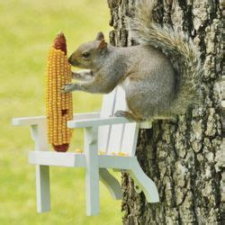 Squirrel Feeder Retro Chair by 31 Best Images About Squirrel Feeders On